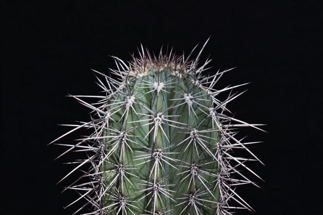 cactus-733376_1920