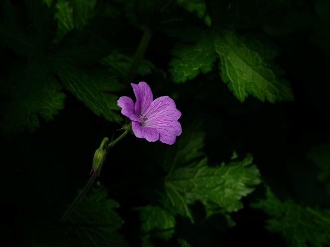 flower-193588_1920