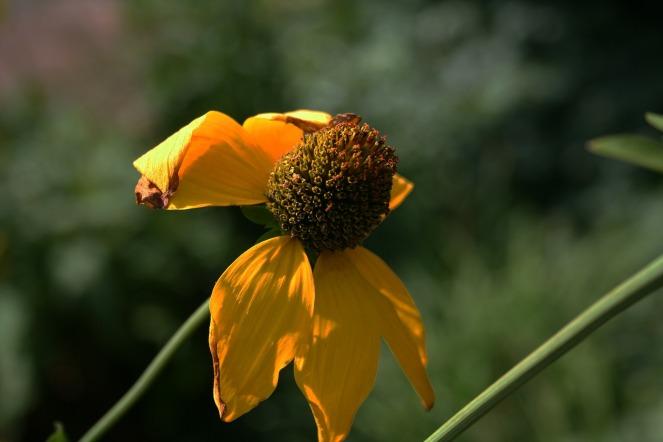 flower-177865_1920