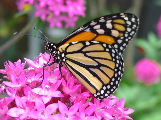 butterfly-2313448_1920