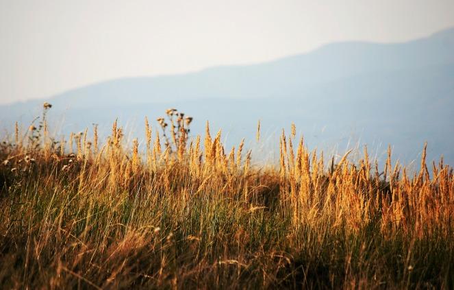 meadow-1633437_1920