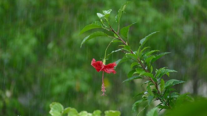rain-2369697_1920