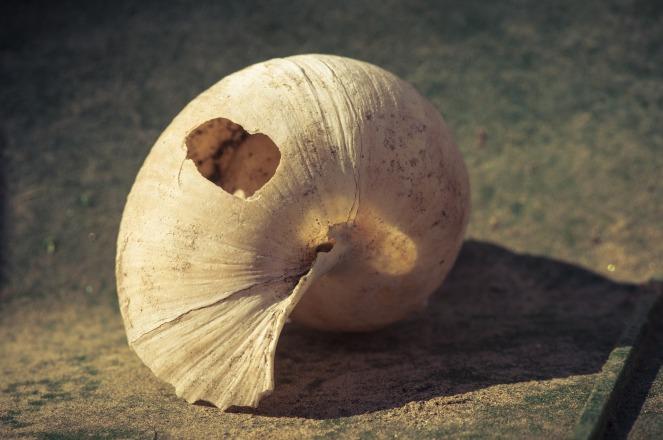 shell-1933591_1920