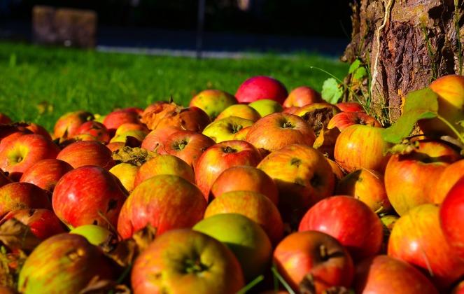 apple-1719620_1920