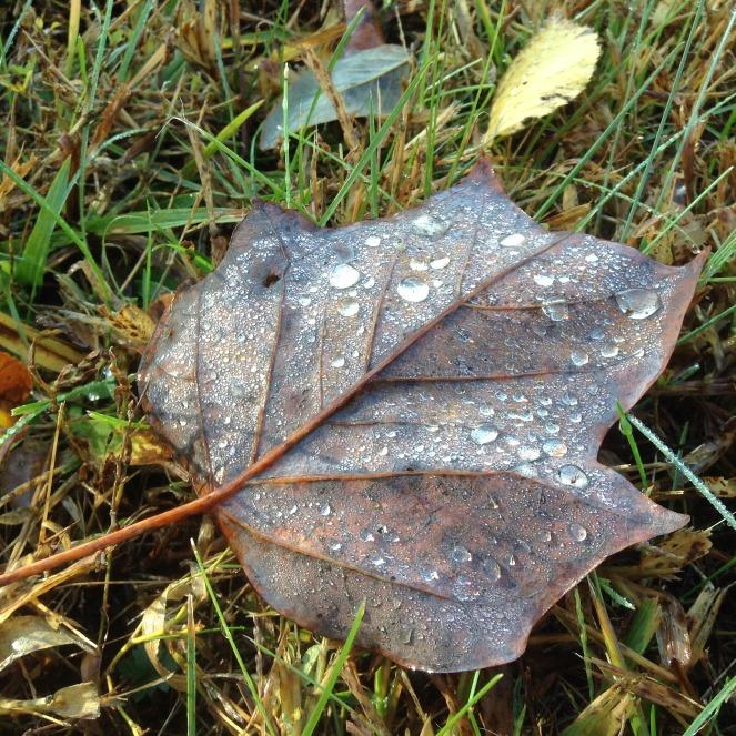 leaf-2416869_1920
