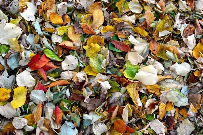 autumn-1869462_1920
