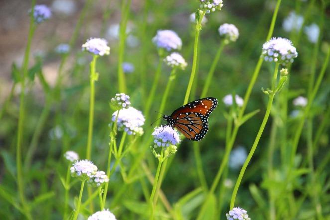 butterfly-2336181_1920
