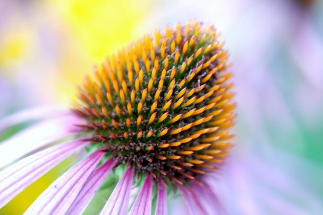 bloom-22786_1920