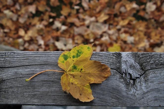 leaf-3759880_1920