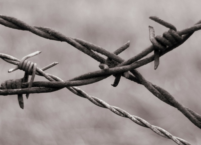 barbed-wire-345760_1920