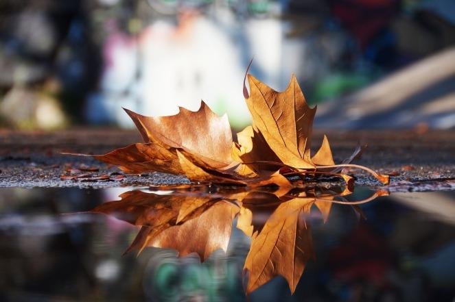 autumn-3891911_1920