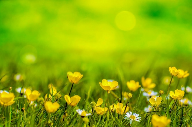 spring-316535_1280