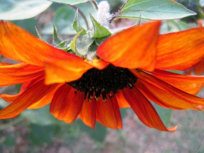flower-205451_1920