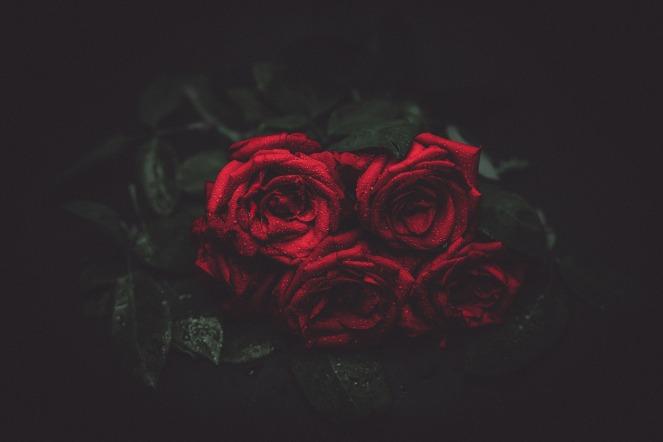 roses-1245869_1920